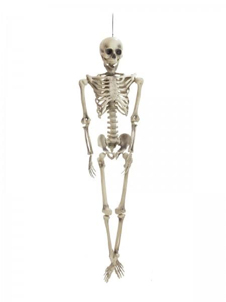 Großes Skelett zum Hängen oder legen - Halloween Deko - 163cm hoch